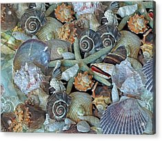 Acrylic Print featuring the photograph Ocean Gems 5 by Lynda Lehmann