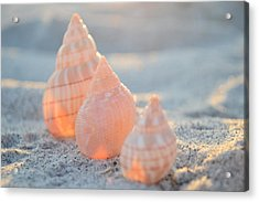 Acrylic Print featuring the photograph Ocean Jewels by Melanie Moraga