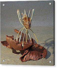 Ocean Spider Acrylic Print by Ruth Edward Anderson