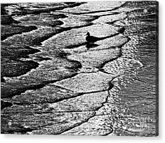 Ocean Surf Beach Scene In Black And White Format Acrylic Print by Carol F Austin