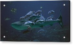 Ocean Treasures Acrylic Print by Betsy Knapp
