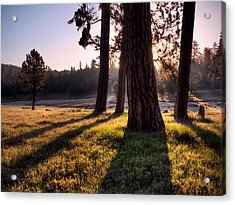 Ochoco Meadow Acrylic Print by Leland D Howard