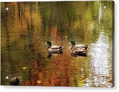 October Swim Acrylic Print