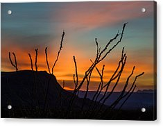 Ocotillo At Sunset Acrylic Print