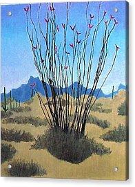 Ocotillo Acrylic Print
