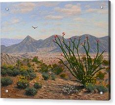 Ocotillo Paradise Acrylic Print by Mark Junge