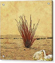 Ocotillo - The Desert Coral Acrylic Print