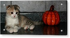 October 2005 Acrylic Print