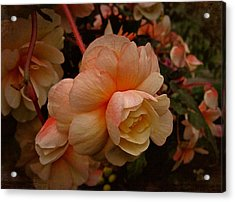 Acrylic Print featuring the photograph Vintage Begonia No. 2 by Richard Cummings
