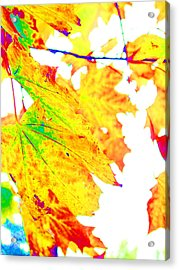 October Leaves Acrylic Print by Nick Gustafson