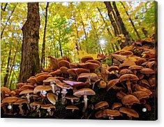 October Mushroom Acrylic Print