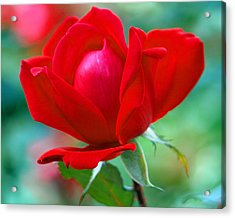 October Red Acrylic Print by Kim