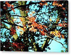 October Road Acrylic Print by JAMART Photography