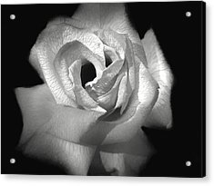 Acrylic Print featuring the photograph October Rose by Donna Kennedy