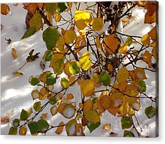 October Snow Acrylic Print by Marilynne Bull