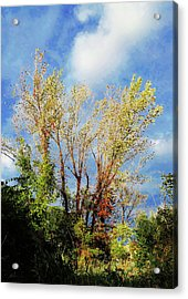 October Sunny Afternoon Acrylic Print