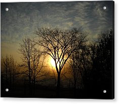 October Sunrise Behind Elm Tree Acrylic Print