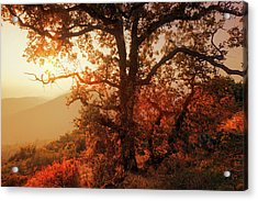 October Sunset Acrylic Print