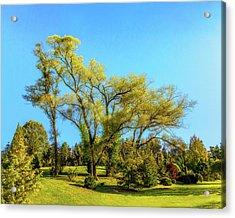 October Tree Acrylic Print