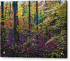 October Woods Acrylic Print