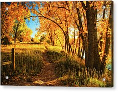 Acrylic Print featuring the photograph October's Light by John De Bord