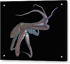 Octopus Acrylic Print by Larry Linton