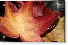 Of Fall Acrylic Print by Frederick Messner