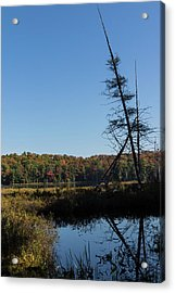 Of Tree Bones And Swamps -  Acrylic Print