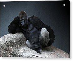 Off Duty Gorilla Acrylic Print