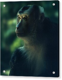 Off In Thought Acrylic Print