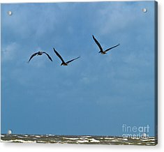 Acrylic Print featuring the photograph Off We Go by Ken Frischkorn