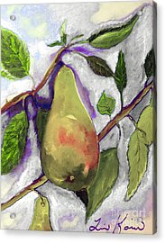 Official Fruit Of Oregon Painting Acrylic Print by Lisa Kaiser