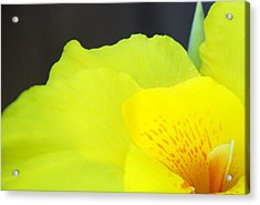 Oh Canna You See Acrylic Print by Diane Fiore
