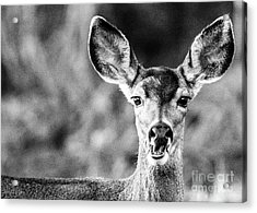 Oh, Deer, Black And White Acrylic Print