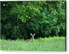 Acrylic Print featuring the photograph Oh Deer by Juergen Roth