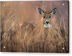 Acrylic Print featuring the photograph Oh Deer by Robin-Lee Vieira