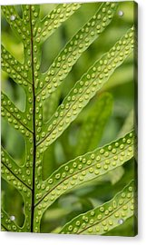 Acrylic Print featuring the photograph Oh Fern by Christina Lihani