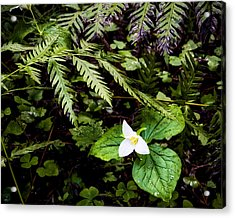 Oh I Feel Fine Acrylic Print by Mike McMurray