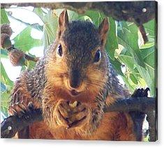 Oh Nuts Acrylic Print by Linda Henriksen