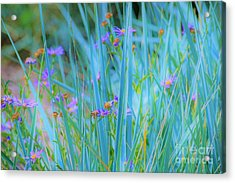 Oh Yes Acrylic Print