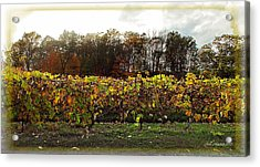 Acrylic Print featuring the photograph Ohio Winery In Autumn by Joan  Minchak