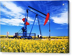 Oil Pumpjack And Canola Field, Arcola Acrylic Print
