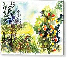Ojai Oranges Acrylic Print by Lily Hymen