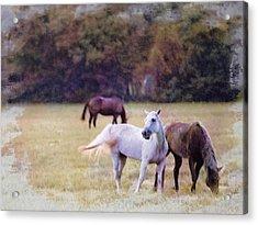 Ok Horse Ranch_1c Acrylic Print