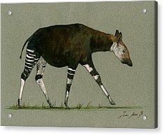 Okapi Art Watercolor Painting Acrylic Print