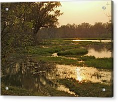 Okavango Delta Gold Acrylic Print