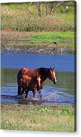 Okay Time To Go. Acrylic Print by Lilly King