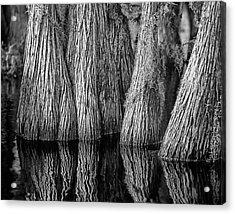 Okefenokee Cypress Acrylic Print