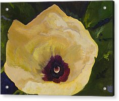 Okra Flower Acrylic Print by Jimmie Trotter
