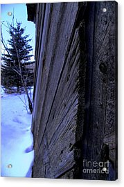 Old And Young Spruce Acrylic Print by The Stone Age